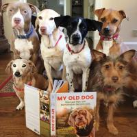 six dogs of different breeds sitting behind a book titled My Old Dog