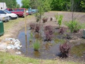Rain Gardens Create Functional Landscapes By Soaking Up And Filtering Rainwater That Runs Off Roofs Driveways Lawns Or Other Impervious Surfaces