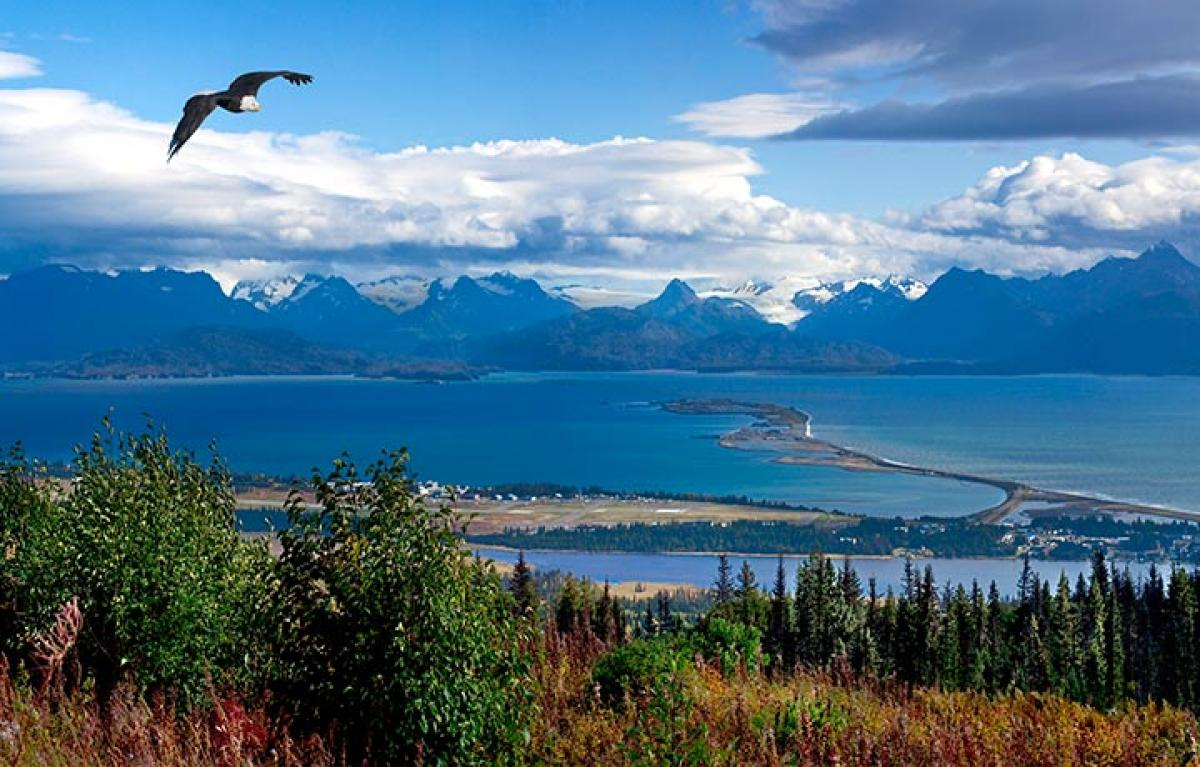 Image result for homer alaska